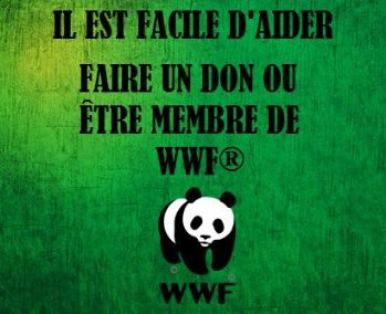 wwf 3