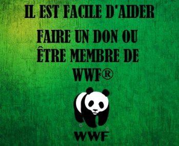 wwf 3